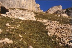 Primulo elatioris subsp. intricatae - Horminetum pyrenaici