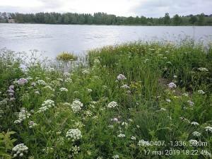 Filipendulo ulmariae - Convolvuletea sepium