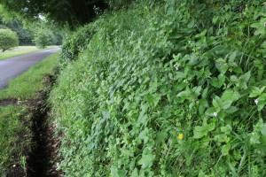 Agrimonio eupatoriae - Trifolietalia medii