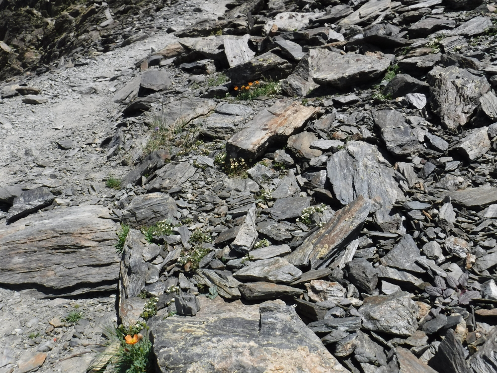 Cerastio pyrenaici - Senecionetum leucophylli